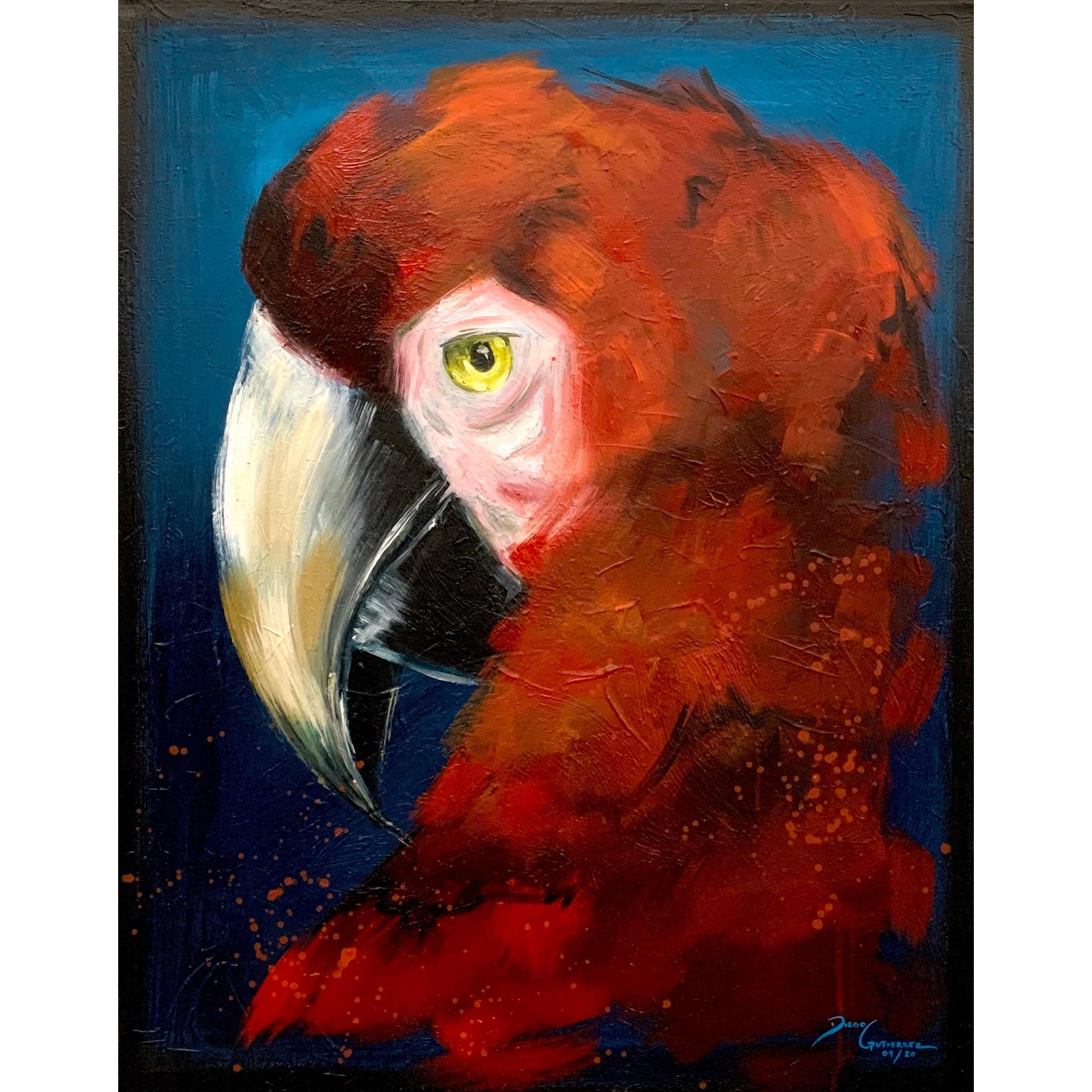 diego-gutierrez-gallery-animals-parrot-04