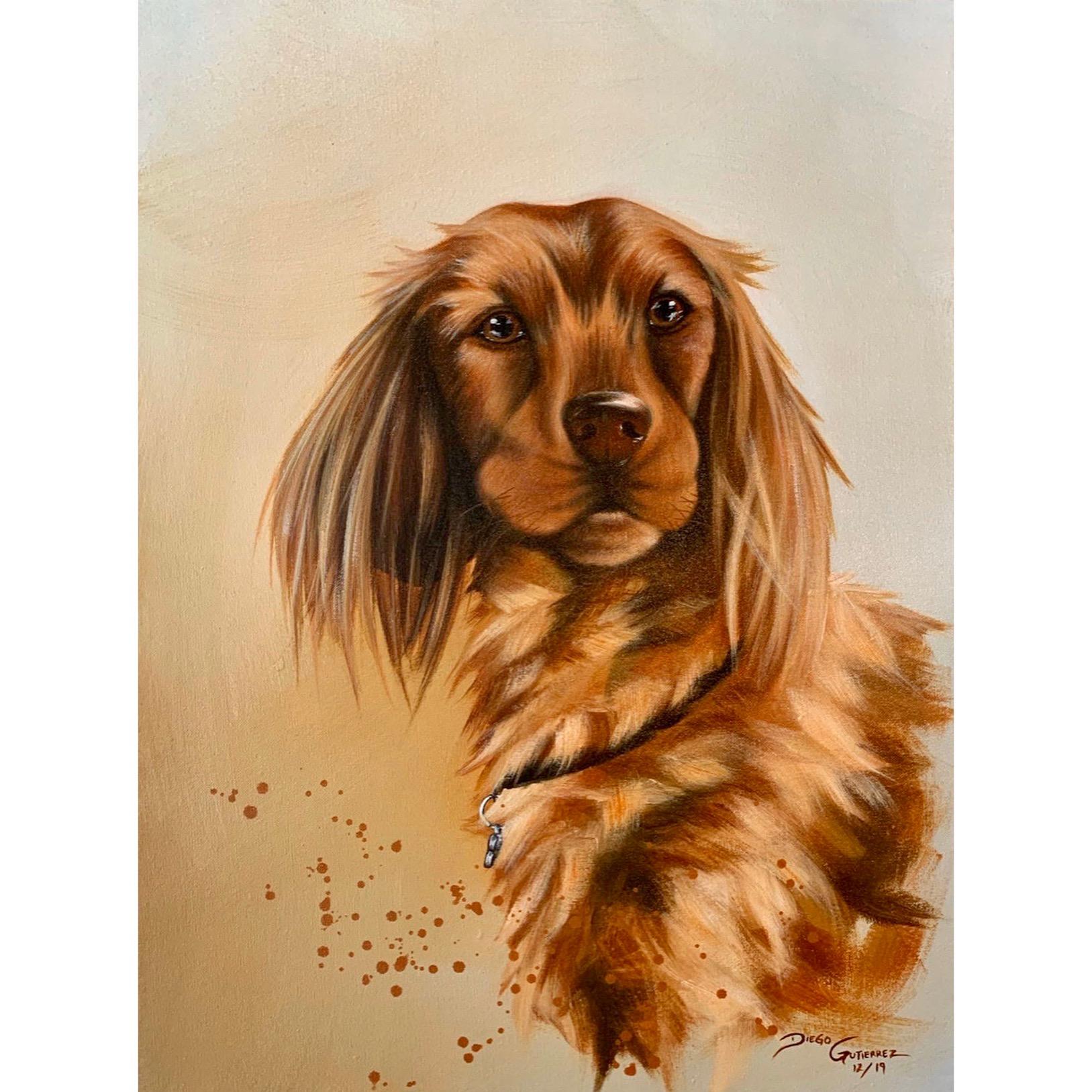 diego-gutierrez-gallery-pets-niki-01